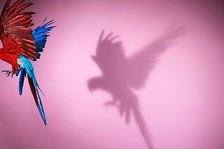 """Sølve sundsbø, """"perroquet # 14"""", 2008."""