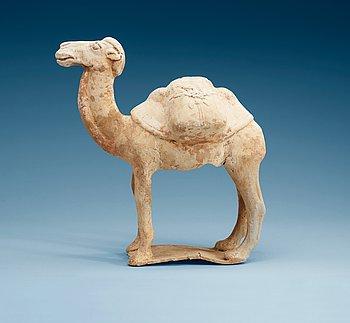 1447. A pottery figure of a Camel, presumably Tang dynasty (618-906).