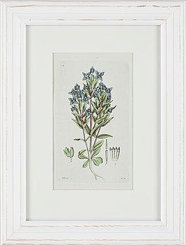 JOHAN WILHELM PALMSTRUCH, 6 st, handkolorerade kopparstick. 1800-tal.