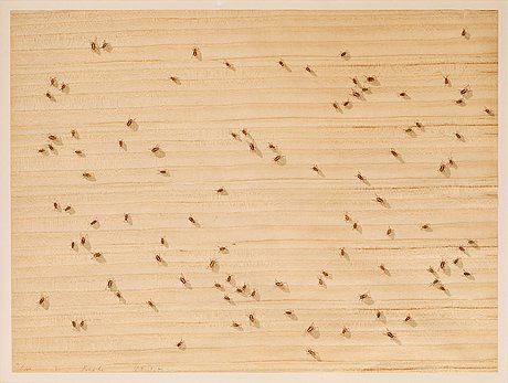 "Edward ruscha, ""cockroaches"", ur: ""insects""."