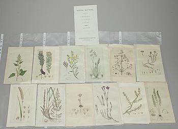 """KOPPARSTICK, 12 st, handkolorerade, Johan Wilhelm Palmstruch, ur """"Svensk Botanik"""" 1807."""