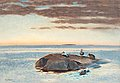 BRUNO LILJEFORS, Common Eiders on a rock. S...