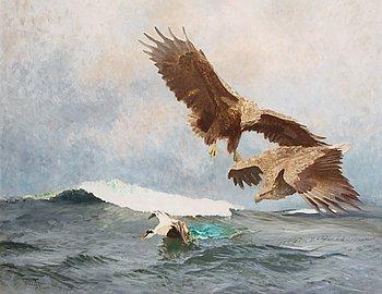 21. BRUNO LILJEFORS, Havsörnar jagande en ejder.