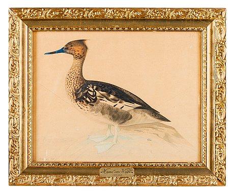 Magnus von wright, bird.
