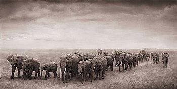 "205. Nick Brandt, ""Elephant Journey to Water, Ambroseli, 2008""."