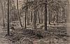 Ivan ivanovitch shishkin, skogsparti