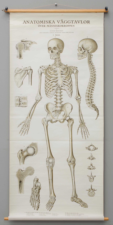 Fantastisch Lebenslauf Skelett Bilder - Entry Level Resume Vorlagen ...