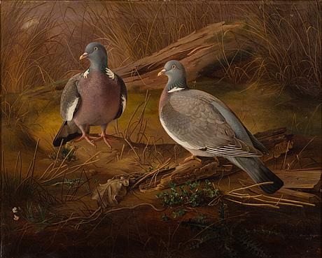 Ferdinand von wright, pigeons