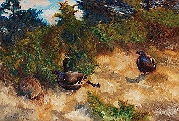 905. Bruno Liljefors, Grouse black cocks.