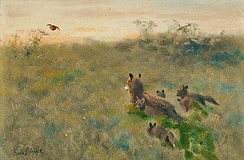 907. Bruno Liljefors, Fox family on the hunt.