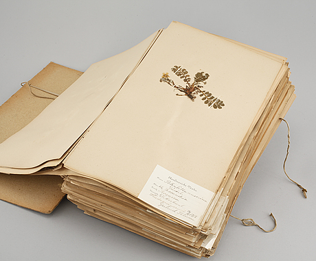 A herbarium with around 110 plants, early 20th century.