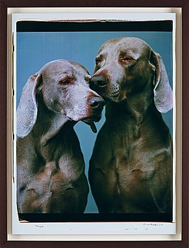 "269. William Wegman, ""Nuzzle"", 2001."