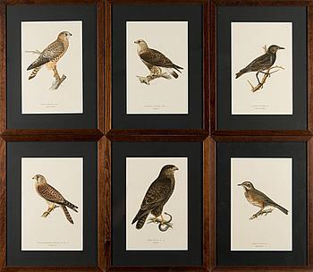 """LITOGRAFIER, 6 ST, ur bröderna von Wrights """"Svenska fåglar""""."""