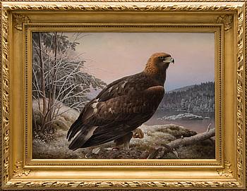 """FERDINAND VON WRIGHT, """"Eagle""""."""