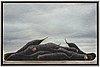 Philip von schantz, philip von schantz, oil on canvas, signed pvs and dated 80.