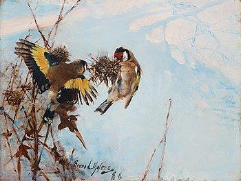 "249. Bruno Liljefors, ""Steglitsor"" (Goldfinches)."