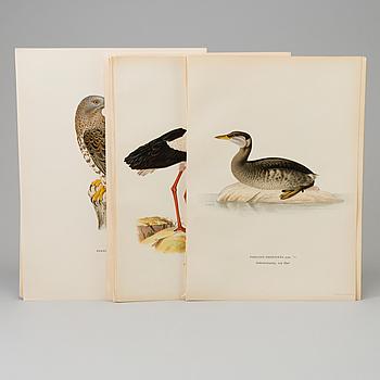 LITHOGRAPH, 30 pcs, after von Wright, Magnus, Wilhelm and Ferdinand & Hallberg, Bror. A. Börtzell, Stockholm.