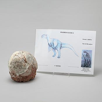 DINOSAURIEÄGG, fossil.